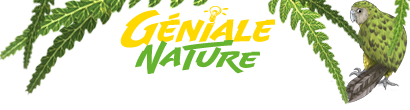 Logo de Géniale Nature sortant des fougères
