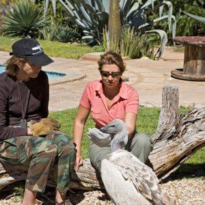 Avec Maria et le vautour Nesher, cours de nourrissage