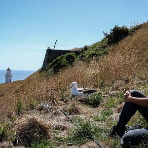 Le bonheur... un moment zen avec un albatros royal du Nord à Ta