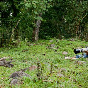 Discussion avec un boa au Costa Rica