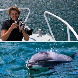 Les très rares dauphins d'Hector en Nouvelle-Zélande