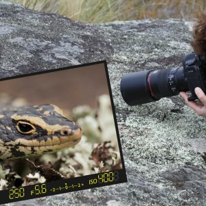 Sabine rencontre un Oligosoma otagense en Nouvelle-Zélande