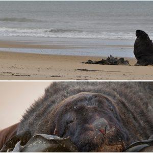 Sabine rencontre les lions de mer de Nouvelle-Zélande