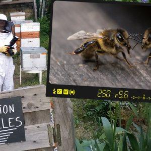Aux Jardins du Ruisseau, Paris, discussion entre abeilles