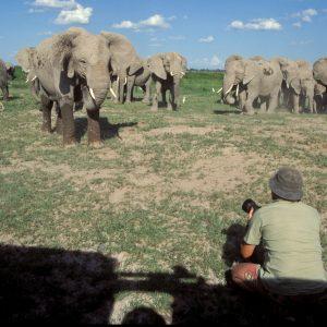 Michel en discussion avec une troupe d'éléphants