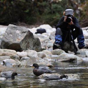 Recherche de whio dans les montagnes de Nouvelle-Zélande