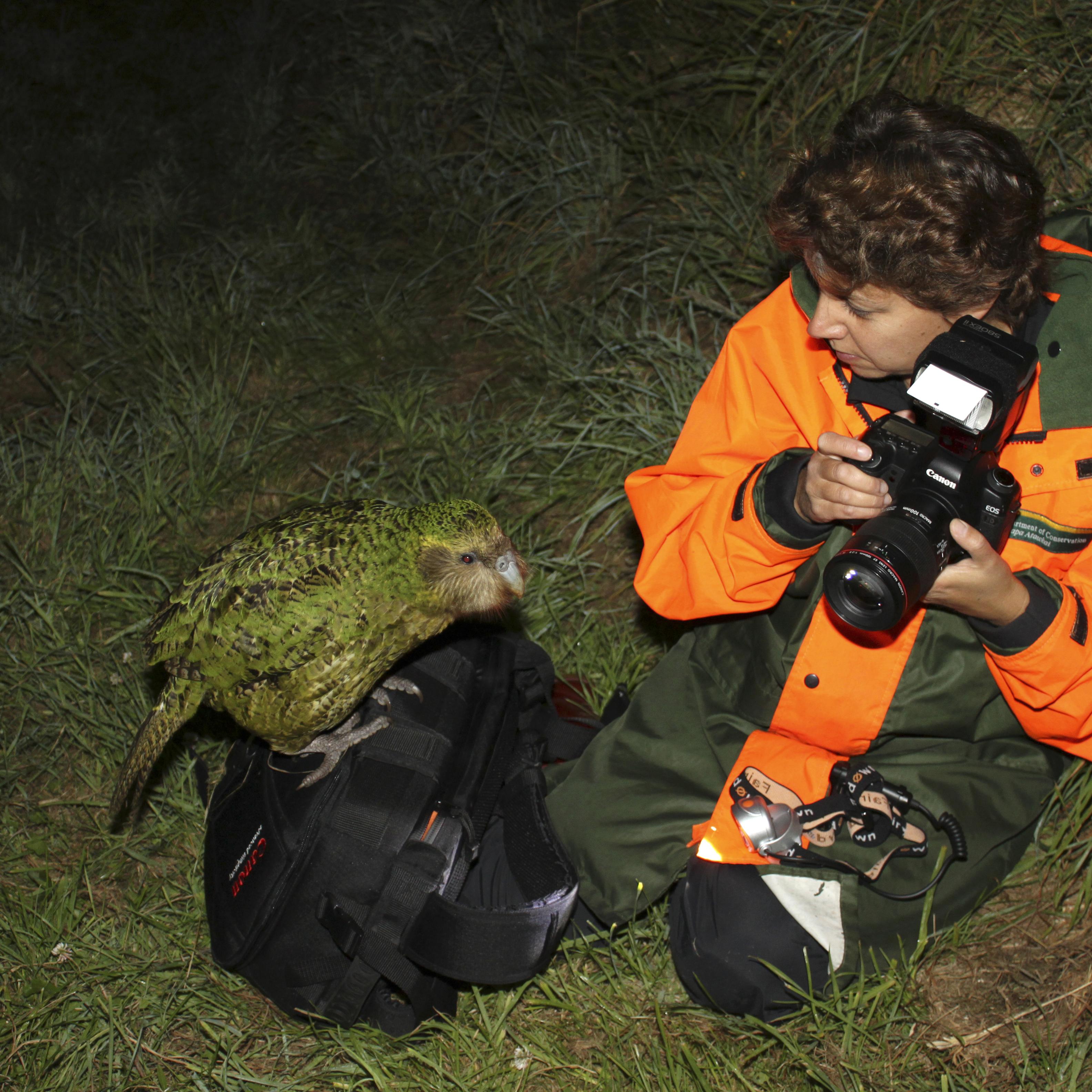 Sirocco le Kakapo