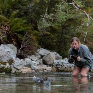 Ros Cole et des Whio dans un torrent de montagne, Nouvelle-Zélande