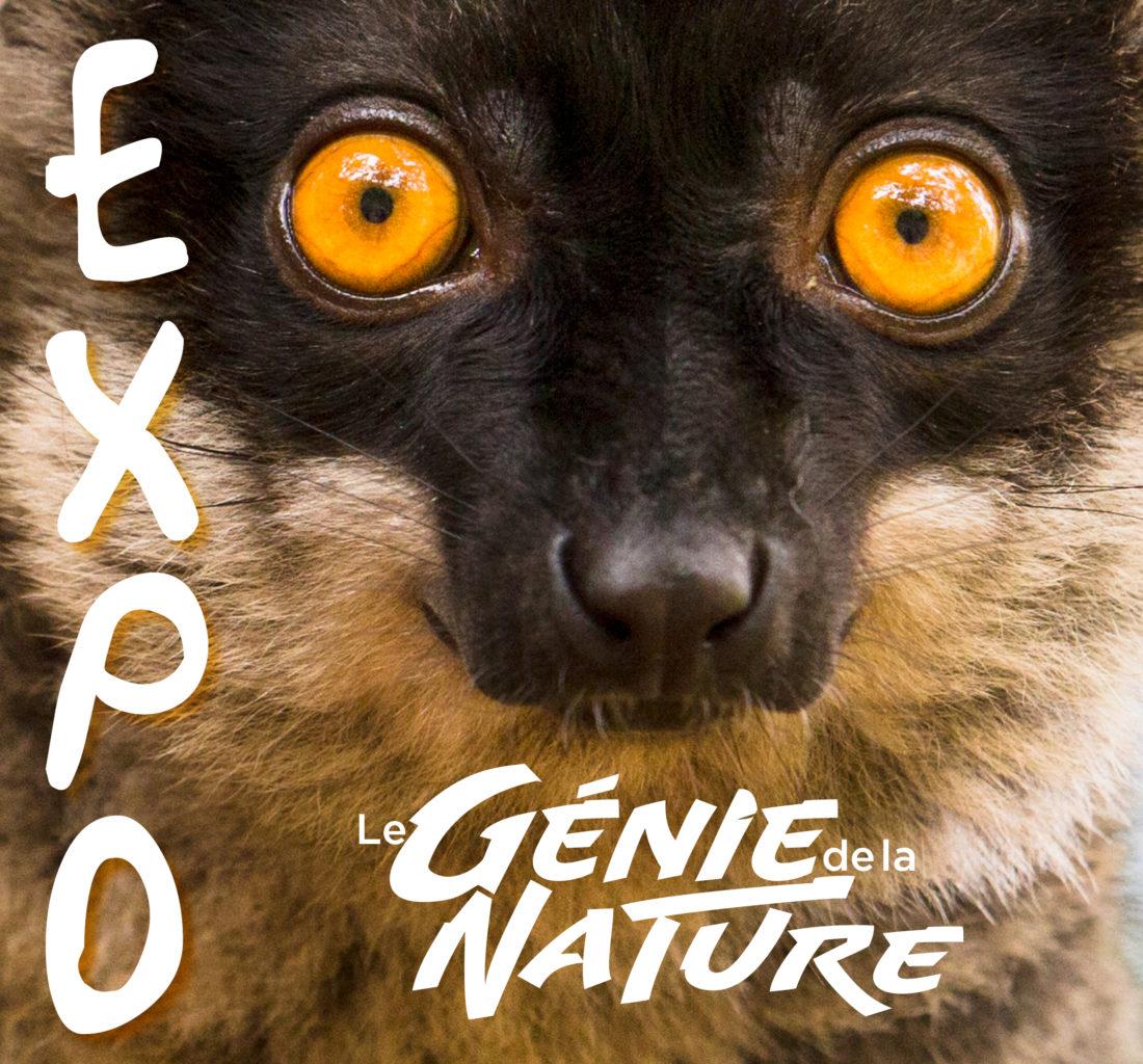 Yeux de lémuriens pour illustration de l'expo virtuelle le Génie de la Nature !