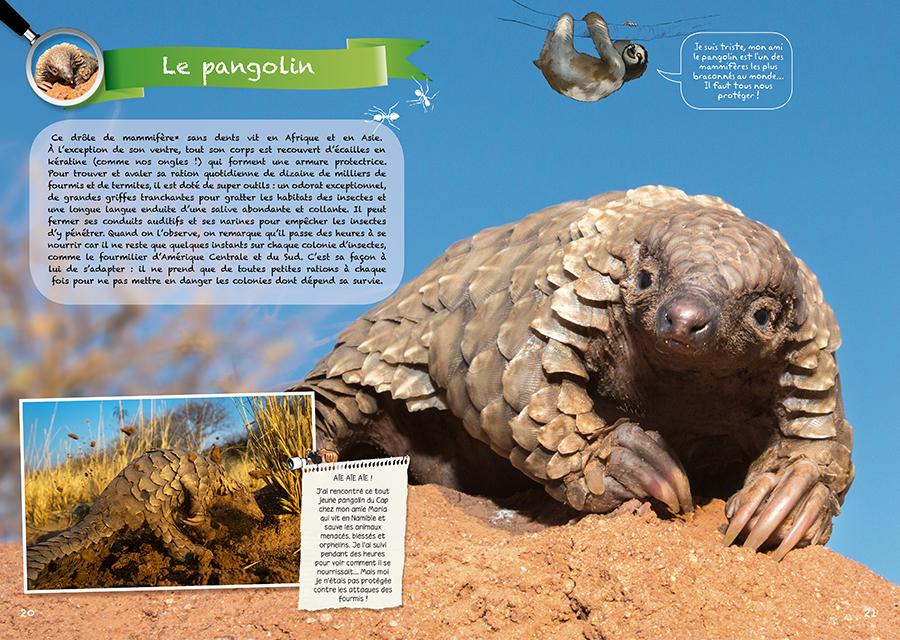 Doublepage pangolin livre Comme dans la Nature