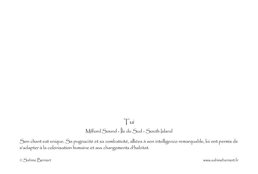 Carte Verso du portfolio Nouvelle-Zélande
